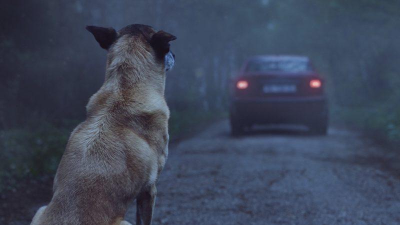 Abandono de perros en España | Abandono de perros de caza en España | Informe abandono perros en España | Datos estadísticos abandono de perros en España | Metiras sobre el abandono de perros de caza en España | Mentiras sobre el abandono de galgos en España | Blog de Caza menor | Cuaderno de Caza