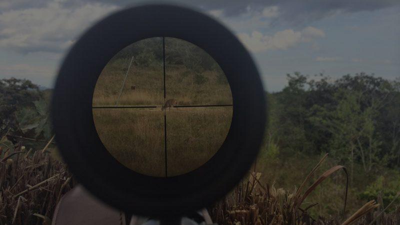 La caza en el punto de mira | Blog de caza menor | Cuanderno de caza