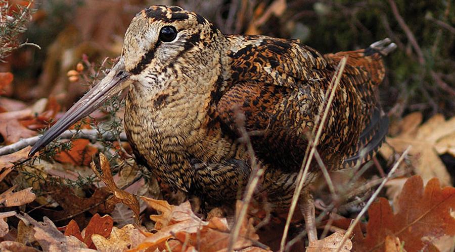 Primera experiencia cinegética | Bautismo de caza | Primera experiencia caza de becadas | Blog de caza menor | Cuaderno de Caza
