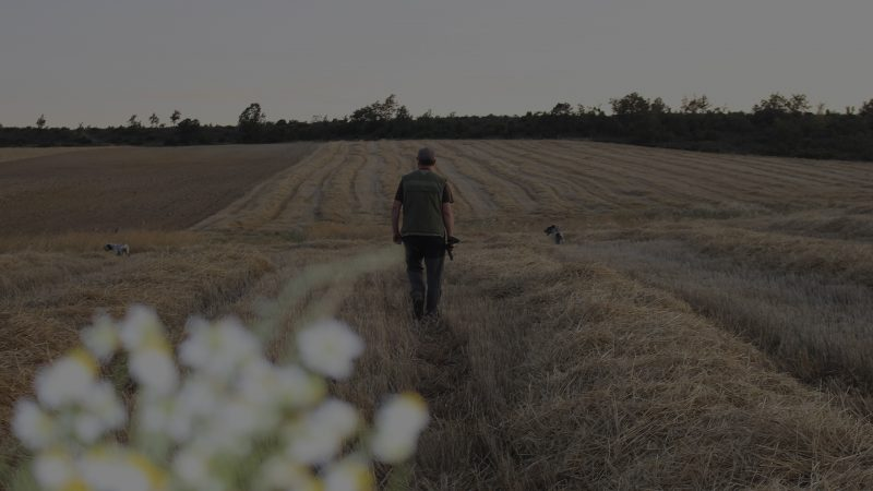 Cazando codornices en Palencia Norte | Cazando codornices en la Media Veda | Caza de codorniz en Palencia Norte | Caza de codornices en la Valdavia | Resultados Media Veda 2018 | Resultados caza de codorniz en Palencia | Blog de Caza menor | Cuaderno de Caza