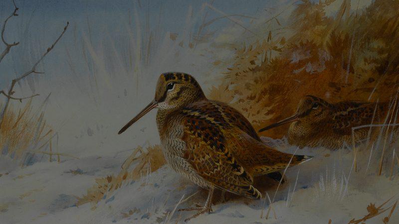 Cazando la becada | Anécdotas caza de becadas - Cuaderno de Caza