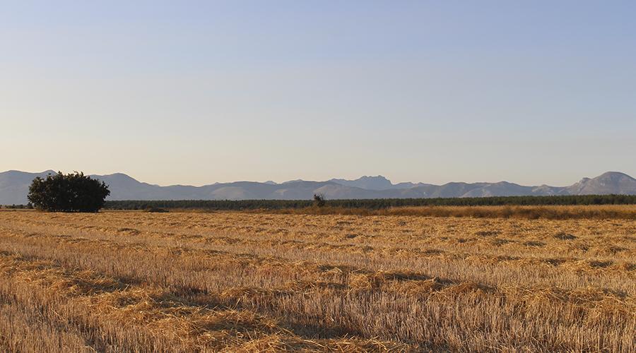 Coto de caza Tabanera de Valdavia | Cotos de caza en Palencia Norte | Cotos caza de codorniz en Palencia Norte | Cotos caza de sorda en Palencia Norte | Cotos caza de becada en Palencia Norte | Cotos caza menor en Palencia Norte | Cotos de caza en la Valdavia | Cotos caza de codorniz en la Valdavia | Cotos caza de sorda en la Valdavia | Cotos caza de becada en la Valdavia | Cotos caza menor en la Valdavia | Blog de Caza menor - Cuaderno de Caza