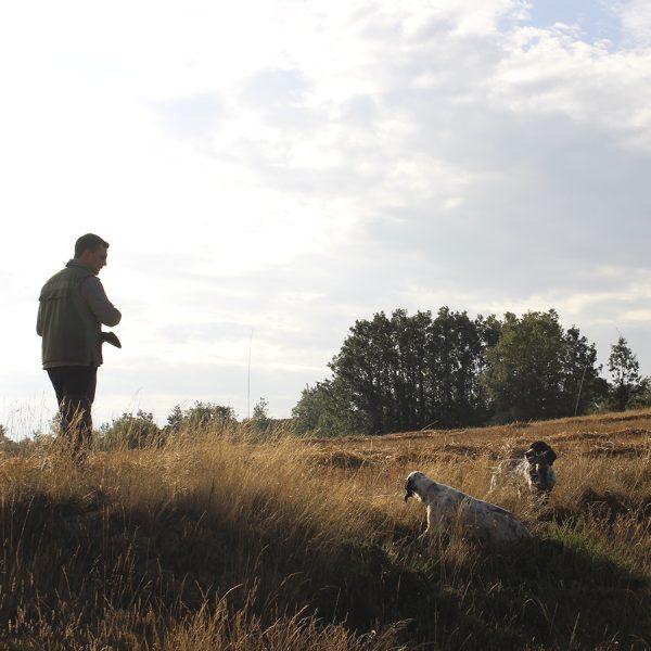Fotos de caza de becadas | Fotos de caza de sorda en Cantabria | Caza de sorda en Cantabria | Fotos setter inglés cazando becadas | Fotos de caza de codorniz | Caza de codorniz en Castilla | Caza de codorniz en Palencia | Fotos de caza menor | Fotos de caza menor en Cantabria | Cuaderno de Caza