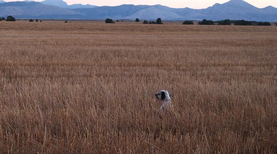 Mi primer perro de caza | Homenaje a mi mejor perro de caza | Blog de Caza menor | Cuaderno de Caza