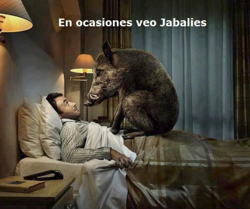 En ocasiones veo jabalíes | Humor de Caza | Cuaderno de Caza