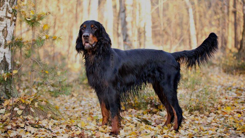 Homenaje al perro de muestra | Perros de caza | Cuaderno de Caza