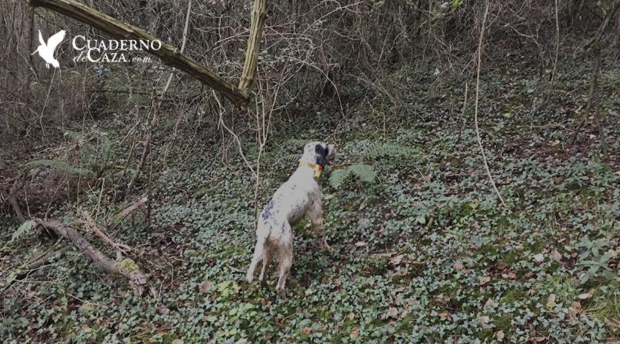 Jornada de caza tras la Dama del Bosque | Cuaderno de Caza