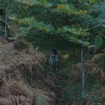Primeras jornadas de caza tras la becada | Cuaderno de Caza