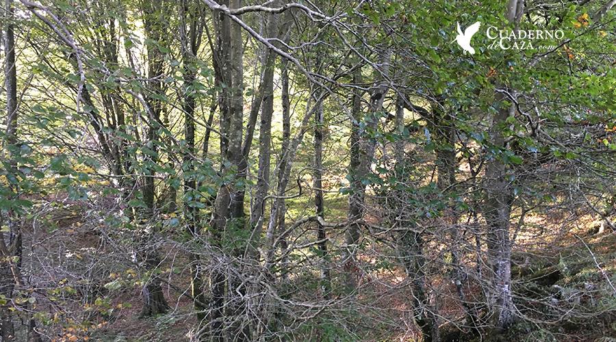 Primeras jonadas de caza tras la becada | Cuaderno de Caza
