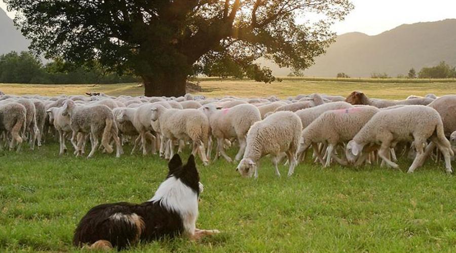 Ley de Protección Animal de La Rioja | Cuaderno de Caza