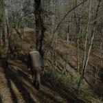 Final temporada de becadas 2018 - 2019 | Resultados caza de becadas Cantabria 2018 - 2019 | Cuaderno de Caza