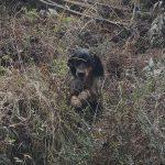 Campeo con Setter Inglés | Campeo perros de caza | Cuaderno de Caza