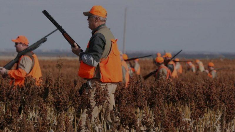 Daños producidos por el jabalí | La caza es necesaria | Cuaderno de Caza
