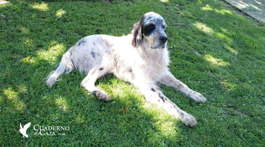 Abandono de perros de caza | Informe Fundación Affinity abandono de perros 2018 | Cuaderno de Caza