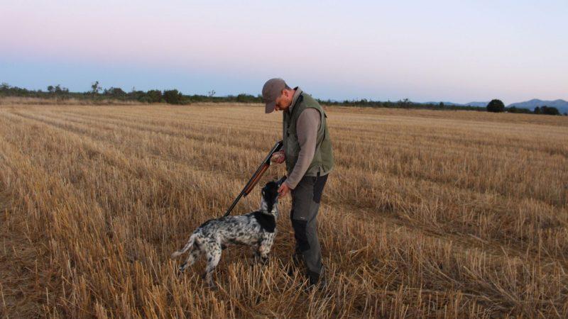 Gestión de la codorniz en los cotos de caza | Cuaderno de Caza