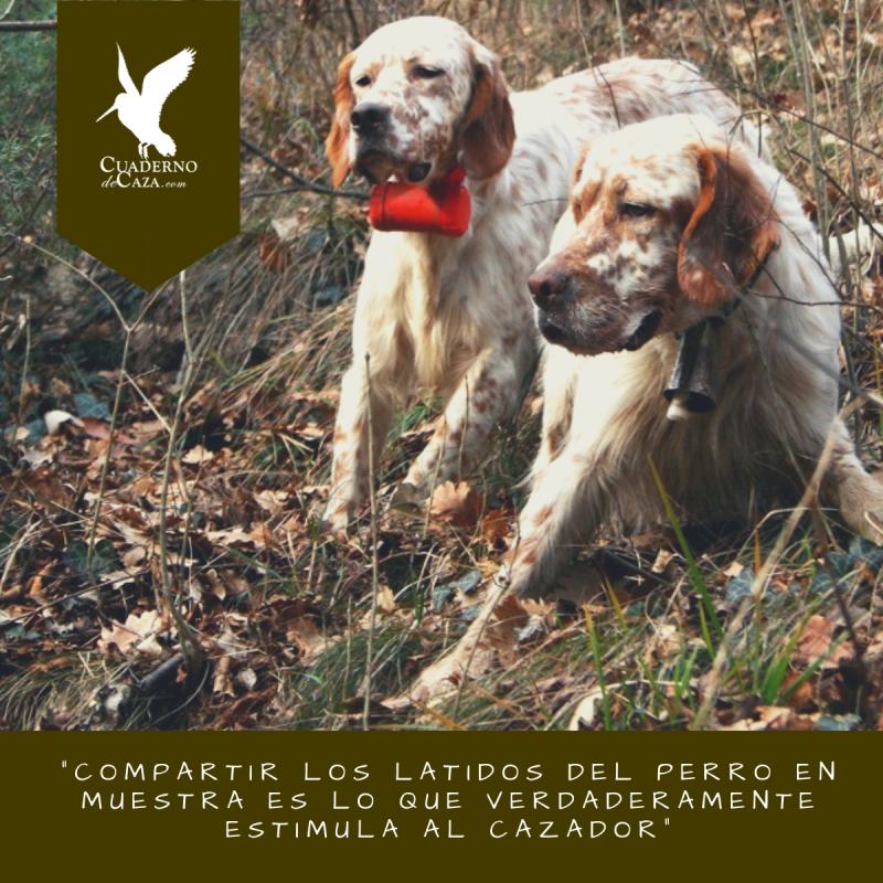 Compartir los latidos del perro de muestra estimula al cazador | Cuaderno de Caza