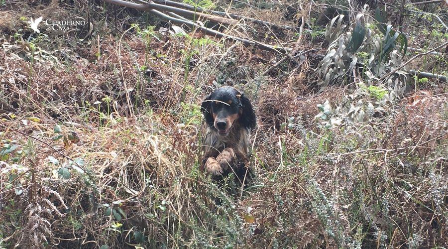 Edad para sacar a un cachorro de caza | Cuaderno de Caza