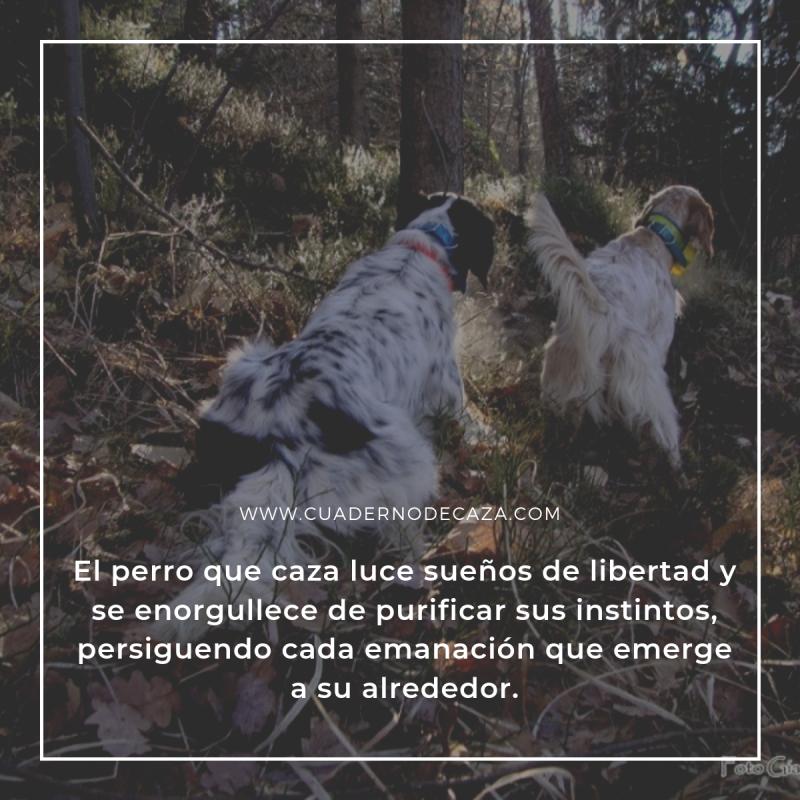 El perro que caza luce sueños de libertad... | Frases de caza con imágenes | Cuaderno de Caza