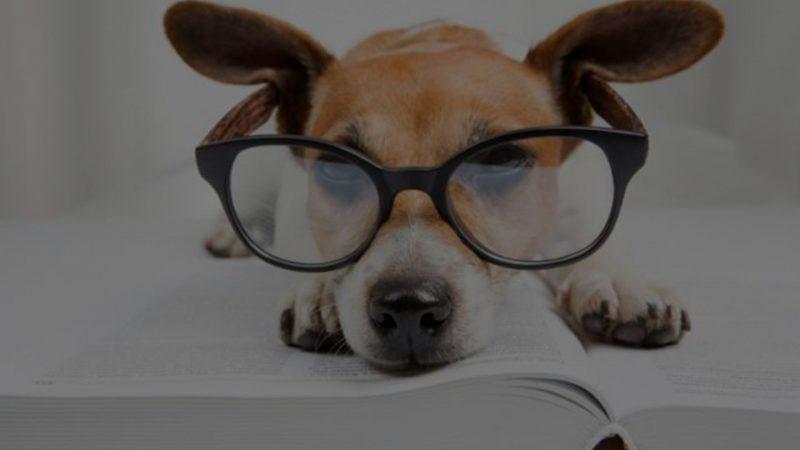 Humanizar a los perros no es bienestar animal | Cuaderno de Caza
