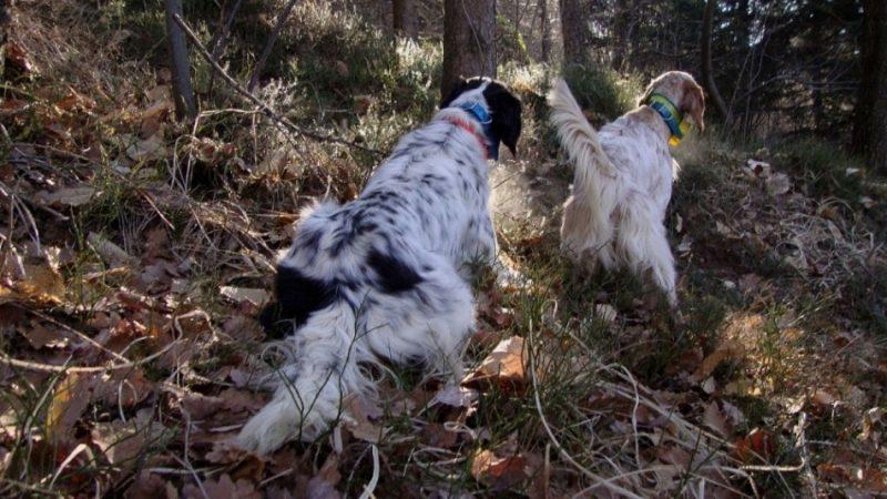 Listillos critica perros | Entendidillos de la caza | Cuaderno de Caza