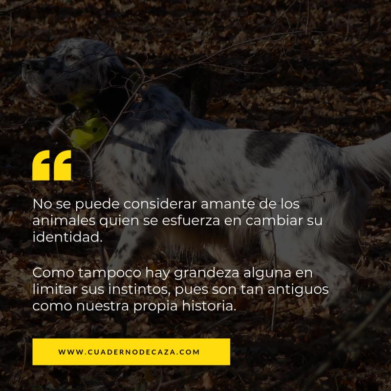 Frases sobre el perro de caza | Frases de cazadores | Cuaderno de Caza