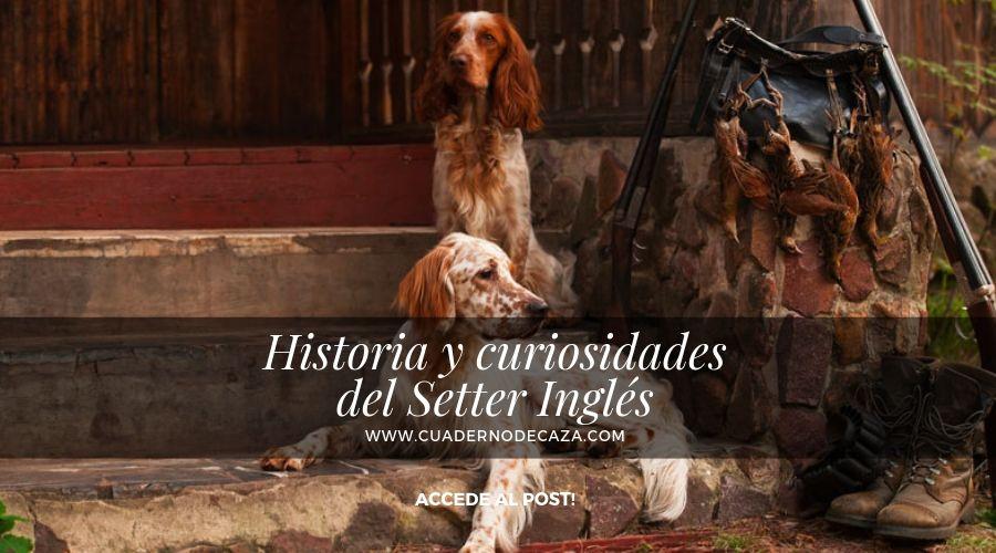 Orígenes del Setter Inglés | Curiosiadades del Setter Inglés | Cuaderno de Caza
