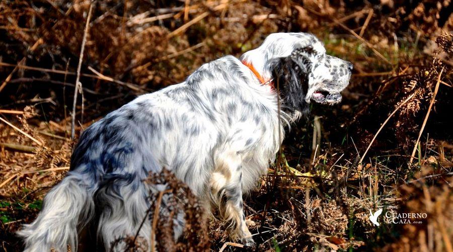 Cazadores que siempre tienene buenos perros | Cuaderno de Caza