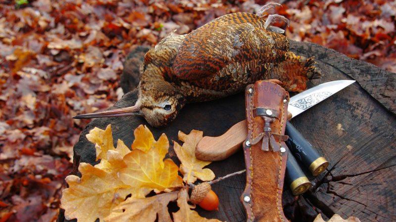 Caza de la Dama del Bosque | Cuaderno de Caza