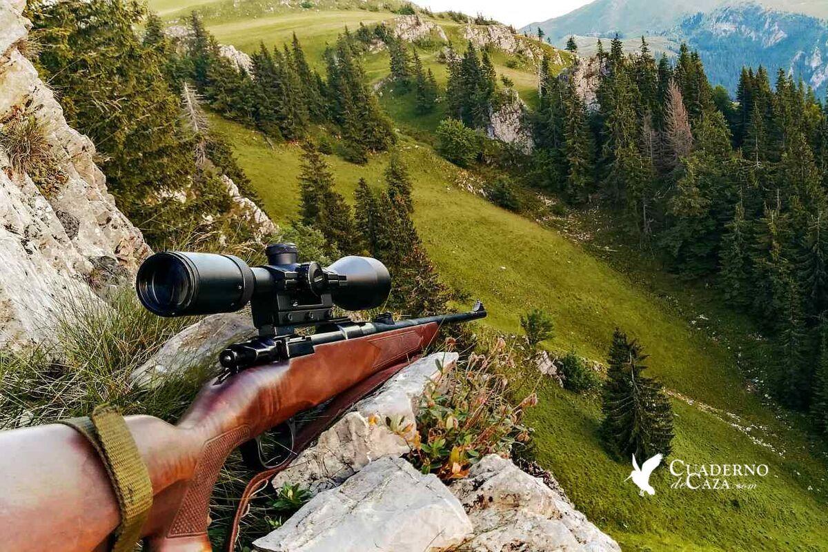 Primera experiencia en la caza del corzo   Cuaderno de Caza