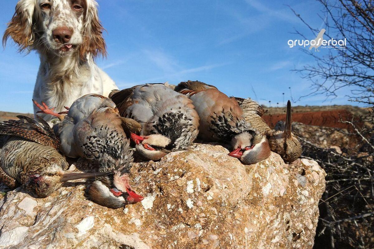 Sorteo jornada caza de perdiz en Grupo Serbal | Cuaderno de Caza
