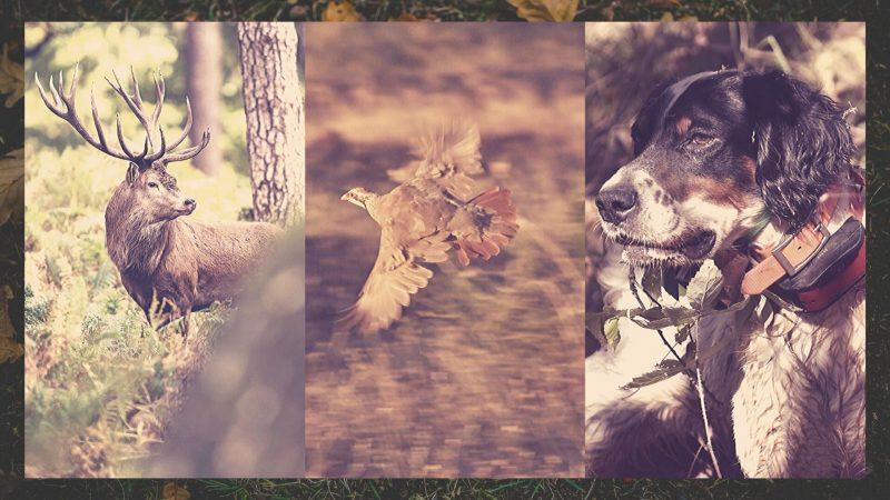 Grupo de caza en Facebook | Foros caza Facebook | Cuaderno de Caza
