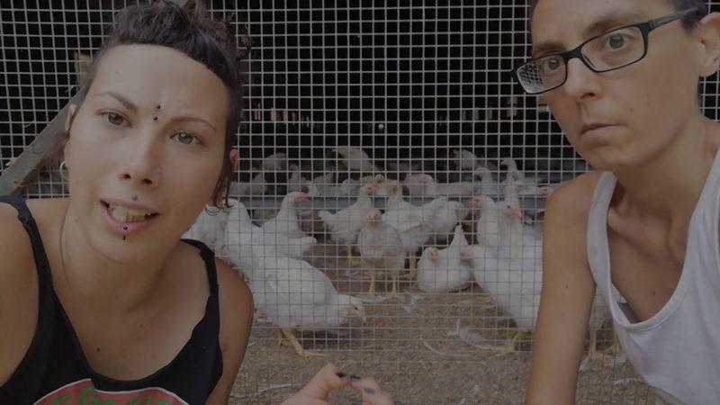 Defensora de las gallines | Publicidad a los anti-caza | Cuaderno de Caza