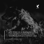 Perro de buena raza | Frases sobre el perro de caza | Cuaderno de Caza