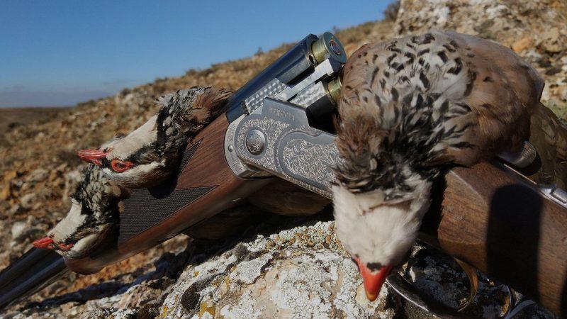 Escopetas del calibre 20 | Opinión calibre 20 | Cuaderno de Caza