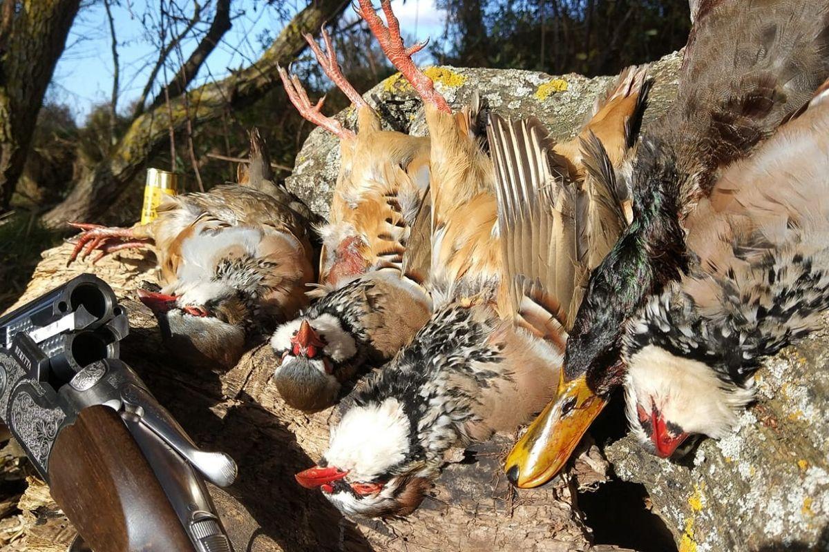 Fotos cazando la perdiz en Burgos | Caza de perdiz | Cuaderno de Caza