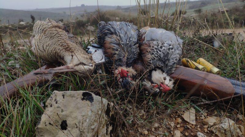 Lances a la becada 2019 | Vídeos caza becadas 2019 | Cuaderno de Caza