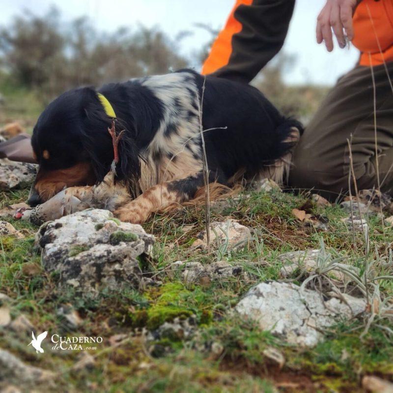 Cuaderno de Caza | Fotos de caza de perdiz