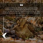 Frases sobre la caza de becadas