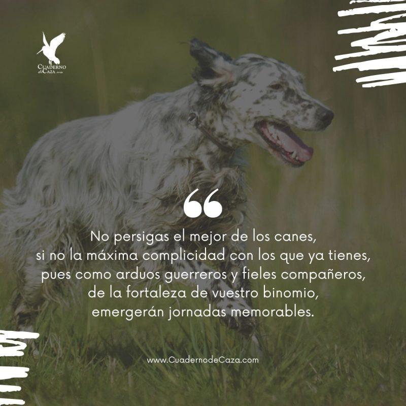 Frases sobre los perros de caza | Frases de caza | Cuaderno de Caza