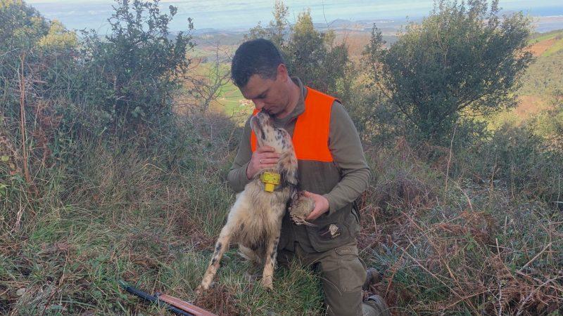 Perros cazadores | Setter Inglés de caza | Cuaderno de Caza