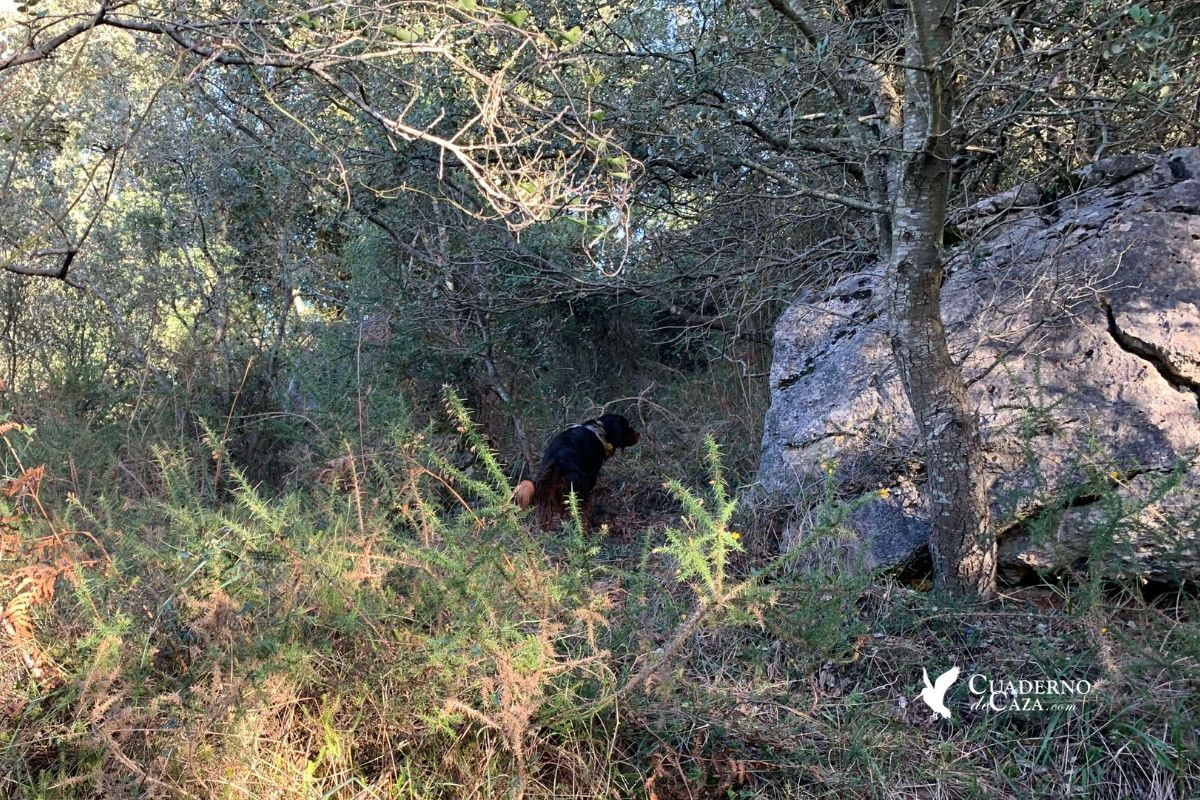 Última jornada de caza de 2019 | Caza de sorda | Cuaderno de Caza