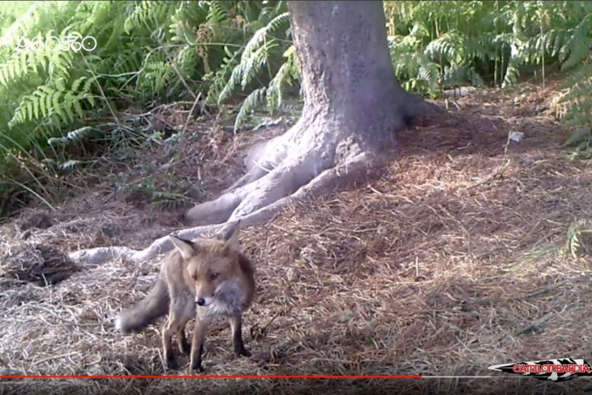 Vídeo de fauna salvaje | Fauna silvestre en España | Cuaderno de Caza