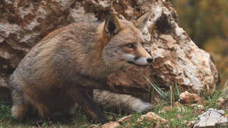 Anécdotas de caza | Cuaderno de Caza