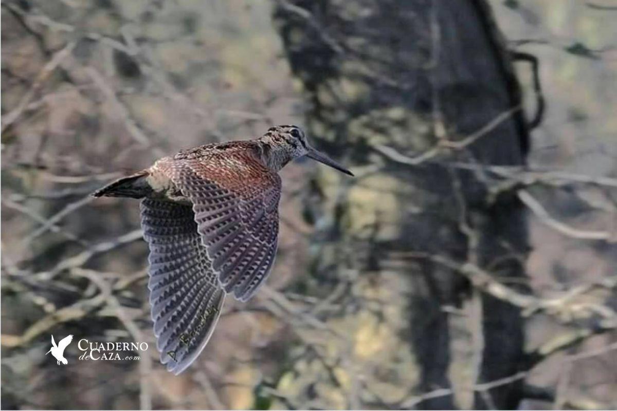 Relato de caza de becadas | Cuaderno de Caza