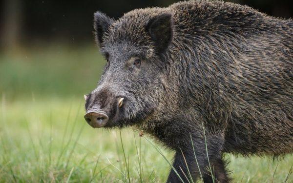 Vídeos de caza en España | Cuaderno de Caza
