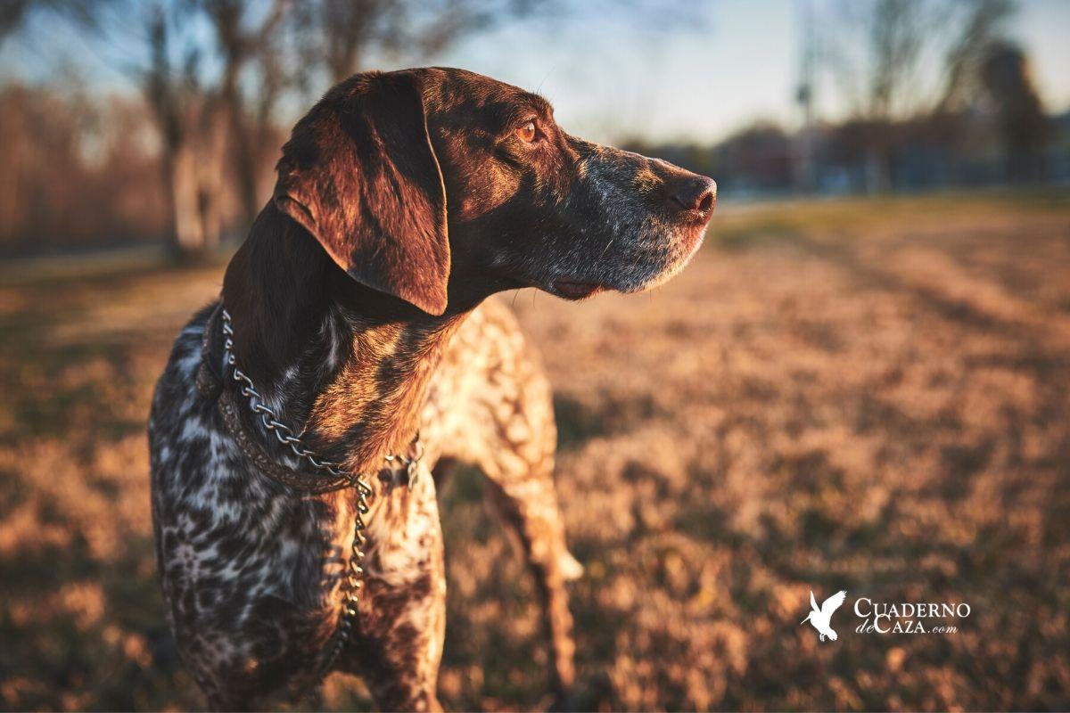 Perros y cazadores | Cuaderno de Caza