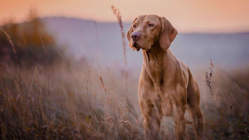 Cazador y perro | Cuaderno de Caza