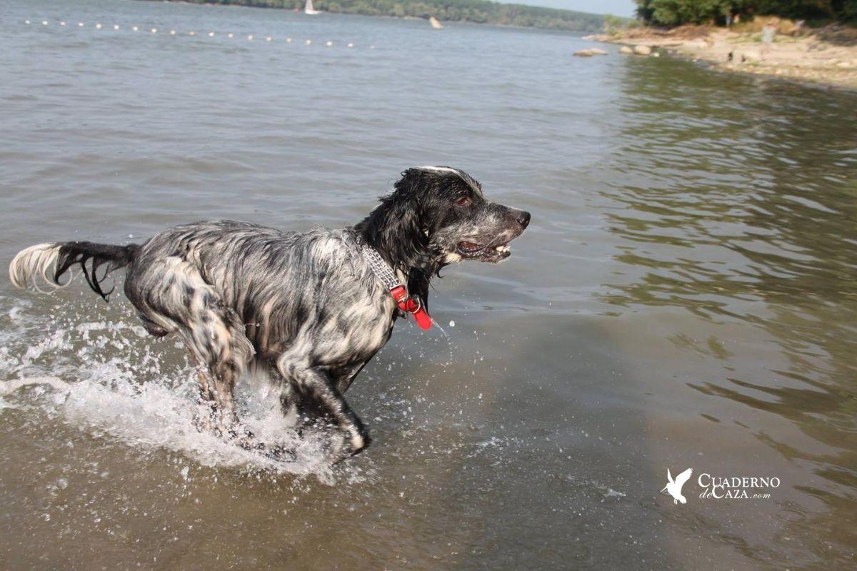 Ingenieros caninos | Cuaderno de Caza