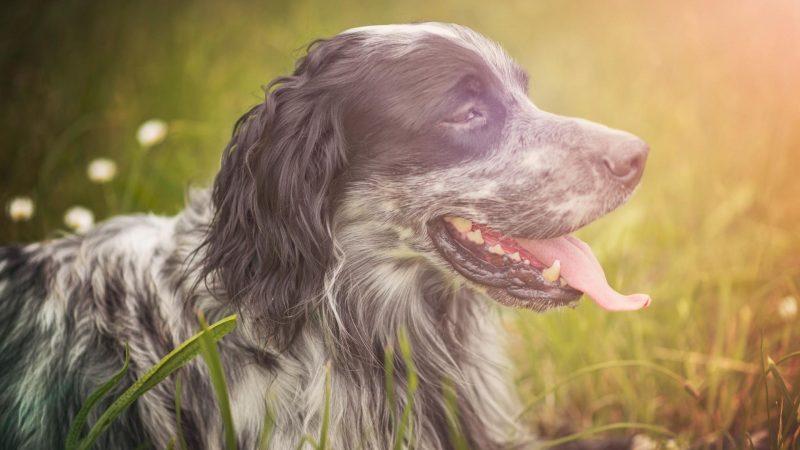 Perros y cotos de caza | Cuaderno de Caza