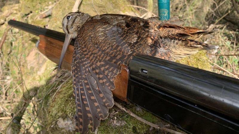 Blog de caza de becadas | Cuaderno de Caza